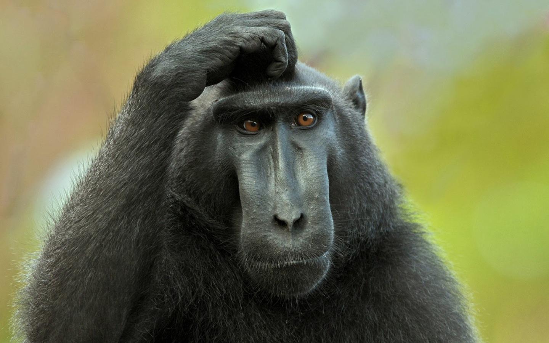 "Philippe Schlenker: ""Monkey Semantics"" February 7 @ 10.30 AM"